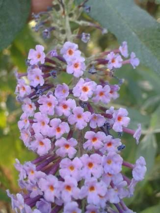 foto-paseo-flor-malva