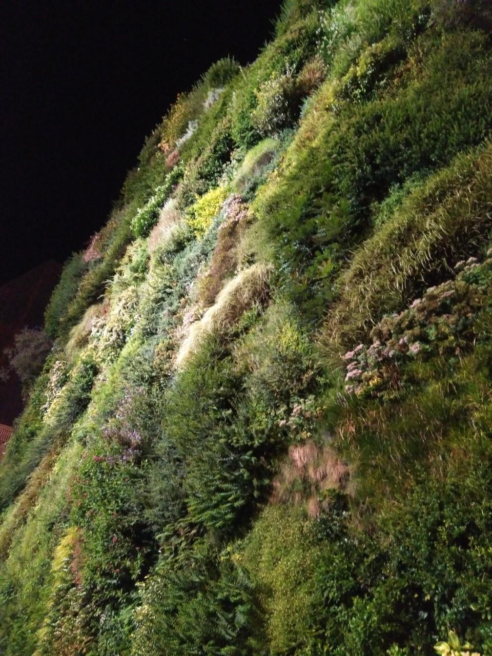 noche-y naturaleza